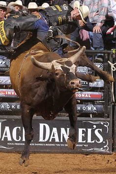 Bushwacker dispatching Douglas Duncan, summer 2011.  pbr.com