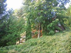 Teljes ház/lakás, Bükkszentkereszt, Magyarország The log home is located in Bukkszentkereszt, just a short distance to Lillafured. It is nestled in the natural grace and tranquility of Bukk Nation. Log Homes, Nature, Plants, Room, Timber Homes, Bedroom, Naturaleza, Wood Houses, Wood Homes