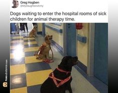 10 Best Funny Animal Photos for Thursday. Serving only the best funny photos in 2019 that will help you laugh today. Funny Animal Photos, Cute Funny Animals, Animal Memes, Cute Baby Animals, Funny Dogs, Animal Pics, Funny Memes, Animal Logic, Funny Pictures