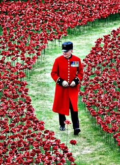 Poppies lie in Tower of London moat to commemorate WW1 victims .
