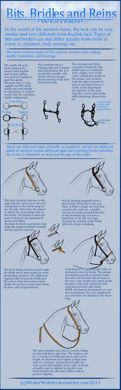 A tutorial from me! Have you missed it? I warn you huge file! Well this time I learn you how to draw bridles bits and reins. I got interested in it today when I saw pictures of horses which h. Horse Riding Tips, Horse Riding Clothes, Horse Information, Horse Care Tips, Horse Anatomy, Horse Facts, Horse Camp, Horse Pictures, Horse Photos