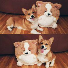 corgi stuffed toy animal dog
