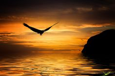 Photo The eagle and the sundown by Carlos Santero on 500px