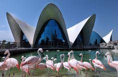 Oceanogràfic. Ciudad de las Artes y las Ciencias. Valencia. www.cac.es.