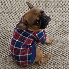 Glenwood Plaid Dogs' Sleepwear