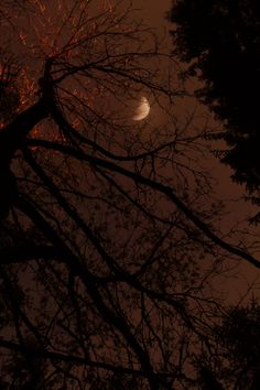 Autumn Rain, Dark Autumn, Season Of The Witch, Night Aesthetic, Autumn Aesthetic Tumblr, Fall Wallpaper, All Nature, Fall Pictures, We Fall In Love