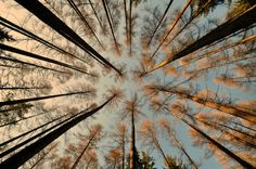 """Lying on his back"" by tomsumartin.deviantart.com on @deviantART  #lying #back #trees #forest #nature #up #sky #angle #magic #place"