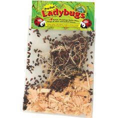 Live Ladybugs - 1500 Adults (Mesh Bag)