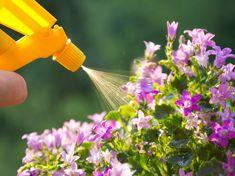 Pflanzen können mit dem richtigen Dünger unterstützt werden. Pflanzendünger selber machen ist hier eine gute Option.