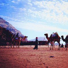 The perfect desert sene. Wadi Rum, #Jordan #Amman #Travel #Photography