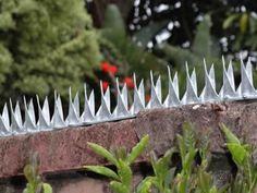 Metal security spikes on the garden perimeter wall.