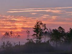 Foggy Sunrise (clouds fog sunrise+sunset trees ). Photo by Biskitten