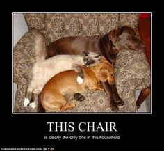 .The chair....