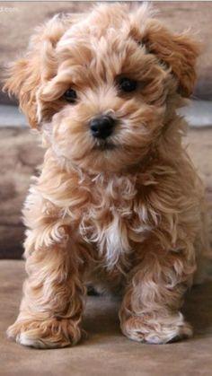 I want this dog.  So bad..