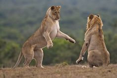 San Valentino: nel giorno degli innamorati il WWF racconta gli 'amori animali'