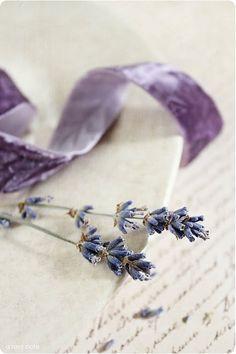 Lavender and Lilac Lavender Cottage, Lavender Tea, French Lavender, Lavender Fields, Lavender Color, Lavender Flowers, Purple Lilac, Shades Of Purple, Purple Ribbon
