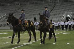 army football mules - Google Search
