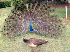 Besutiful Birds