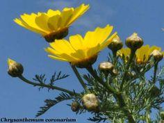 Risultati immagini per fiori spontanei nomi