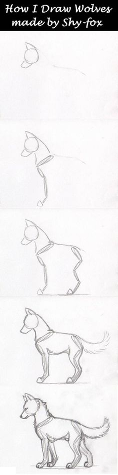 """sketches step by step well yeah this is how I draw my wolves (and all other animals) I first draw their """"skeleton"""" and next start giving the wolf some meat around his skeleton a real wolf skeleton > hope this is usef. Pencil Art Drawings, Art Drawings Sketches, Easy Drawings, Animal Sketches, Animal Drawings, Drawing Animals, Drawing Techniques, Drawing Tips, Drawing Ideas"""