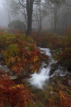 """ Autumn Forest """