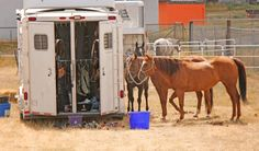 Neurologic EHV-1 in Oregon Horses Increases to Four | Rate My Horse PRO
