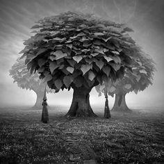 Forgotten Woods - Image by Leszek Bujnowski. ☀