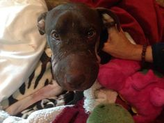Good News! Caitlyn is Doing Great After Surgery, Expected to Make Full Recovery