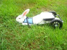 Albert chilling in his rabbit cart from Eddie's Wheels