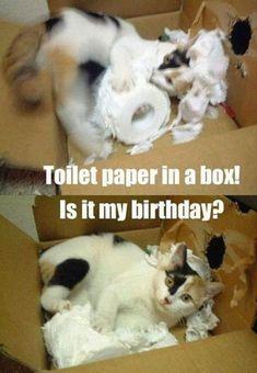 "101 Funny Cat Birthday Memes - ""Toilet paper in a box! Is it my birthday? Happy Birthday Crazy Lady, Funny Happy Birthday Pictures, Funny Animal Pictures, Funny Images, Funny Animal Memes, Funny Cat Videos, Funny Cats, Funny Animals, Animal Jokes"
