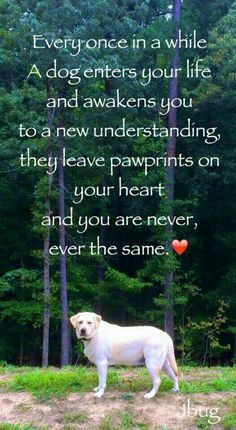 Miss you my love! Cute Puppies, Cute Dogs, Dogs And Puppies, Doggies, I Love Dogs, Puppy Love, Animals And Pets, Cute Animals, Pet Loss Grief