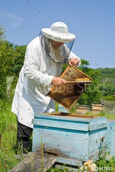 Beekeeper at beehive 1 Beehive, Bee Keeping, Royalty Free Photos, Bees, Clip Art, Stock Photos, Flowers, Image, Royal Icing Flowers