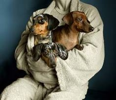 Darling-Dachshunds