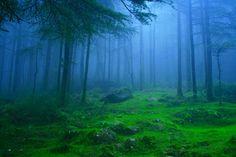 インドのとある森にかかる霧。霧は、普段のなんともない景色でさえ先の見えない不安感とまるで異世界に迷い込んだような不思議な感覚を我々に与える。