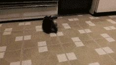 Gave the new kitty a scrap of paper. entertainment for hours.