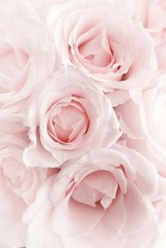 ✧☼☾Pinterest: DY0NNE  #pink
