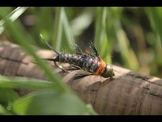 Rowley Stone - #1 Stonefly Pattern - Fly Tying Video - YouTube