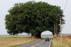 Tree tunnel #Tree