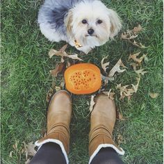Keep the #ivoryellapumpkin submissions coming! Only TWO weeks left.   Don't miss out on the chance to win a $250 SHOPPING SPREE!  Contest Rules: 1. Ceate a ivory Ella themed pumpkin ( painted or carved) 2. Share it on social using #ivoryellapumpkin 3. Tag us @ivoryella  Contest runs from October 7-27 at 11:59pm. Winner to be announced on October 31st. Only one entry per person.