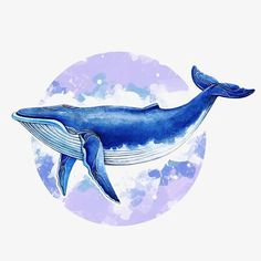 Whale Aquarelle De Baleine And now the Japanese officially resume whaling! Art Inspo, Kunst Inspo, Inspiration Art, Watercolor Whale, Watercolor Animals, Painting & Drawing, Watercolor Paintings, Whale Painting, Animal Drawings