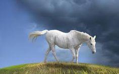 white camarillo horses - Google Search