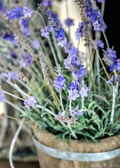 Mix of real and faux lavender