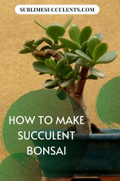 Succulents are ideal for bonsai, so if you're looking for a new project or something interesting to try with your plants, give bonsai a chance. Check out this pin for some great tips on how to make a succulent bonsai! Jade Plant Bonsai, Bonsai Soil, Jade Plants, Bonsai Plants, Bonsai Garden, Money Tree Bonsai, Bonsai Tree Care, Bonsai Art, Bonsai Trees