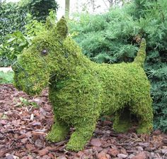 What a find for the garden! A Scottie mossed topiary. (here's a good example of a mossed topiary in a garden setting, to buy here, UK, but we've seen them online and at garden shops, too)