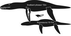 Giant Pliosaur 15 m long!  Forside - SSF