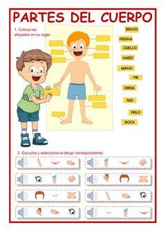 Las partes del cuerpo ficha interactiva y descargable. Comprueba tus respuestas online o enviáselas a tu profesor/a.