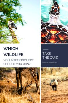 Interested in volunteering abroad in wildlife conservation or animal care? Take the quiz to find the best project for you!