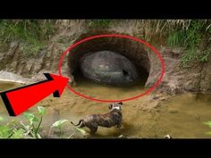 A man sees a weird object in the Riverbank Ends up Changing history - YouTube