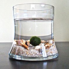 Marimo ;) so soothing...!