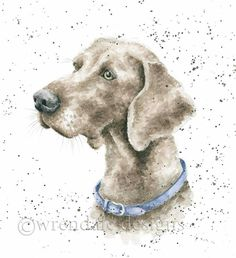 Wrendale Designs by Hannah Dale Weimarner Greeting Card - Set of Three Watercolor Animals, Watercolor Cards, Watercolor Paintings, Watercolors, Different Forms Of Art, Wrendale Designs, Dog Cards, Weimaraner, Pet Portraits